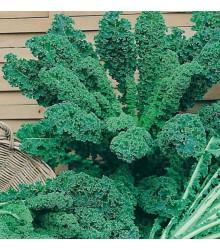 More about Kel kučeravý zelený - semená kelu - semiačka - 0,9 gr