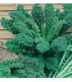 Kel kučeravý zelený - semená kelu - semiačka - 0,9 gr
