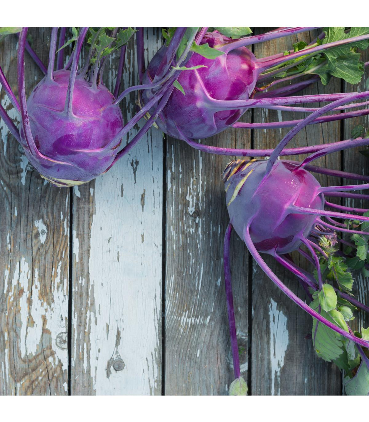 Kaleráb skorý modrý Purple vienna - Brassica oleracea - semená - 0,3 g