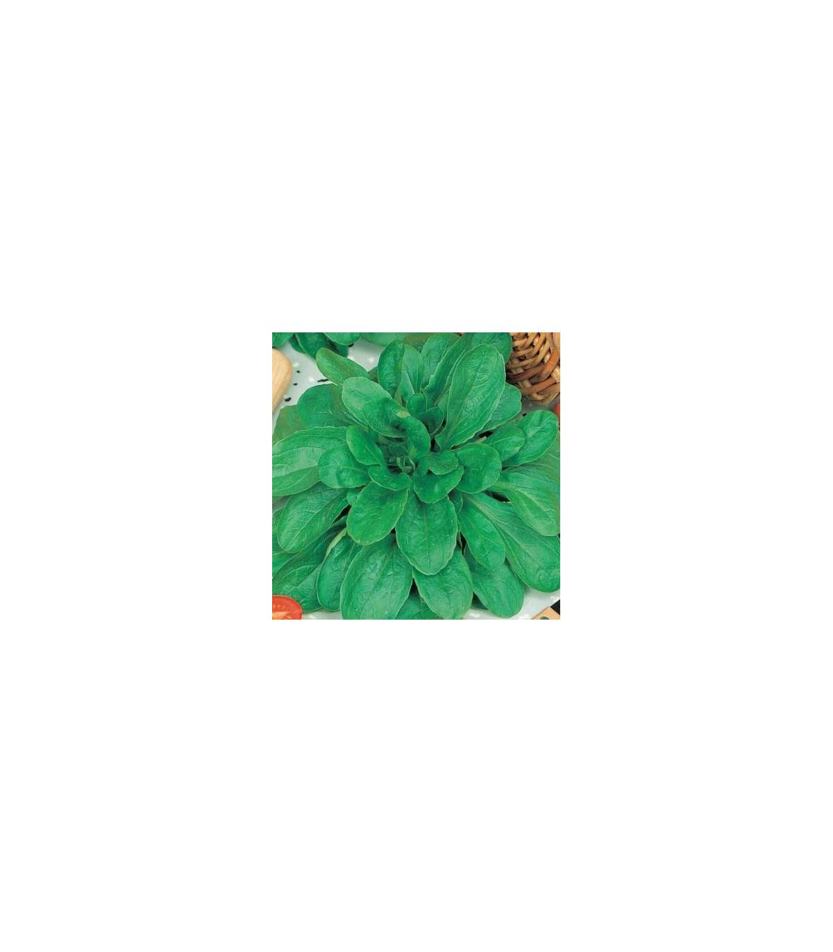 Valeriánka poľná Holand - Vallerianella locusta - semená valeriánky - semiačka - 100 ks