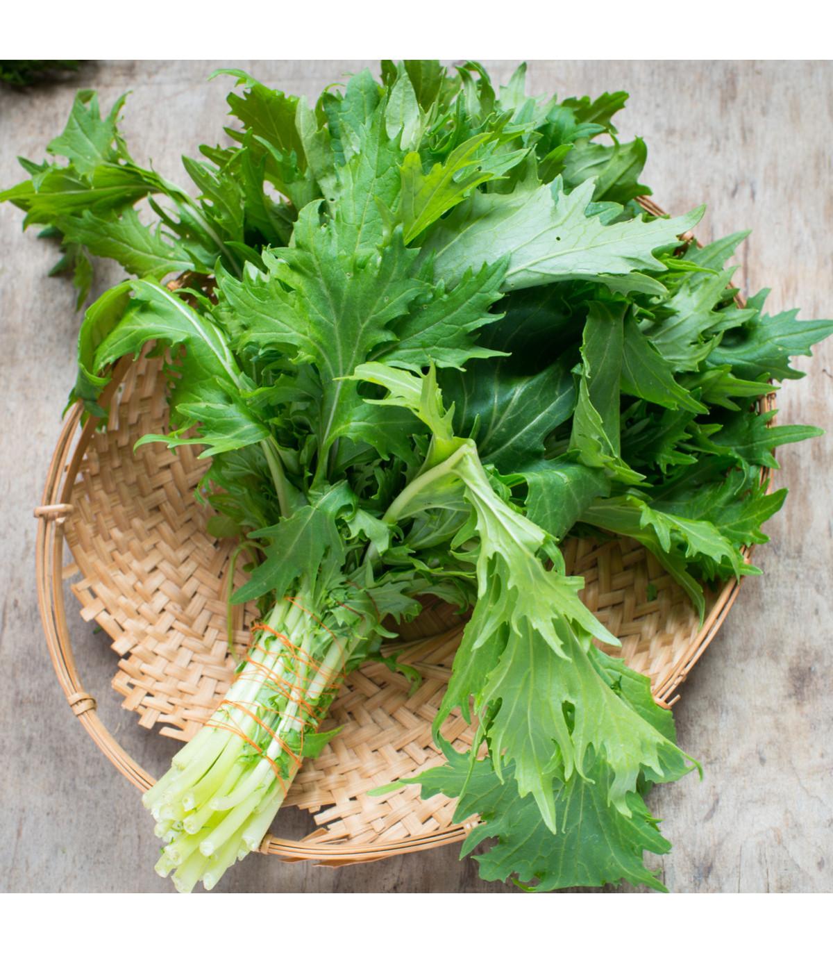 Namenia - Brassica rapa - semená - 200 ks