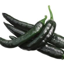 Chilli - Pasilla Bajio - semená chilli - semiačka - 7 ks