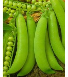 Hrach cukrový - Hendriks - Pisum sativum - semená hrachu - 12 g