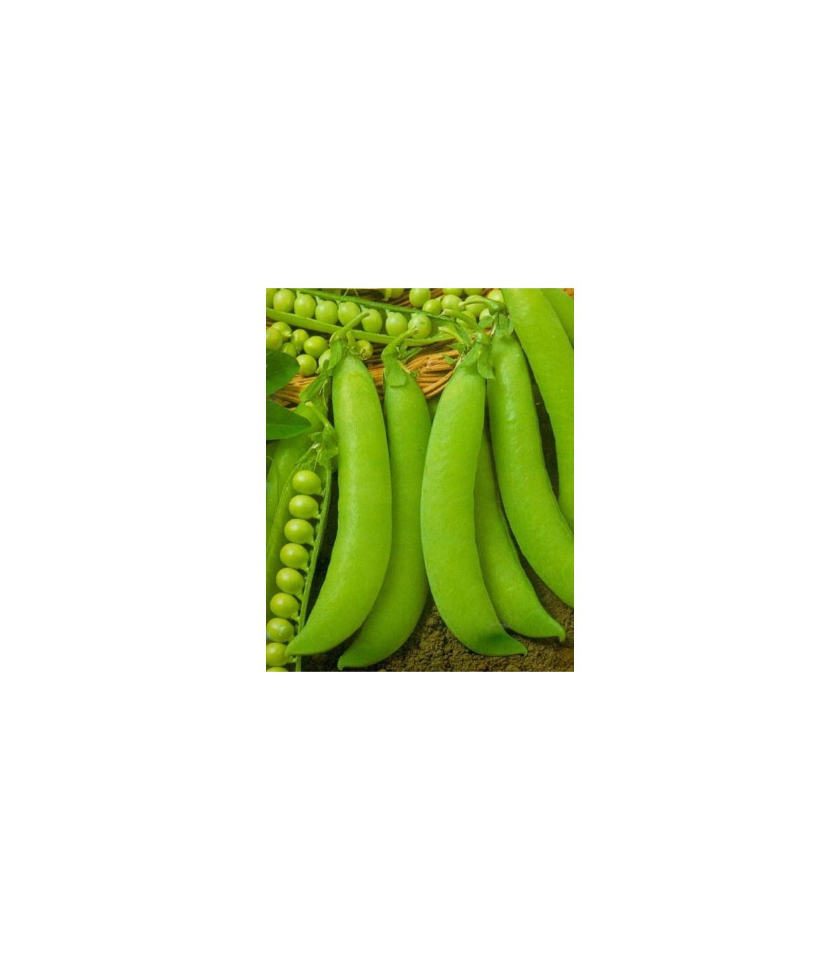 Hrach cukrový - Hendriks - Pisum sativum - semená hrachu - semiačka - 12 gr
