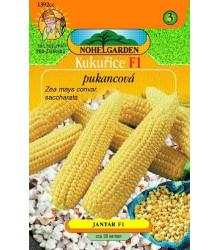 Kukurica pukancová F1 - Zea mays - semená kukurice - semiačka - 15 ks