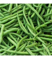 Fazuľa kríčková Saxa - Phaseolus vulgaris - semená fazule - 20 ks