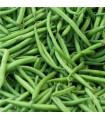 Fazuľa kríčková Saxa - Phaseolus vulgaris - semená fazule - semiačka - 3 gr