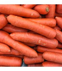 Mrkva Nantaise skorá - Daucus carota - semená mrkvy - semiačka - 1 gr