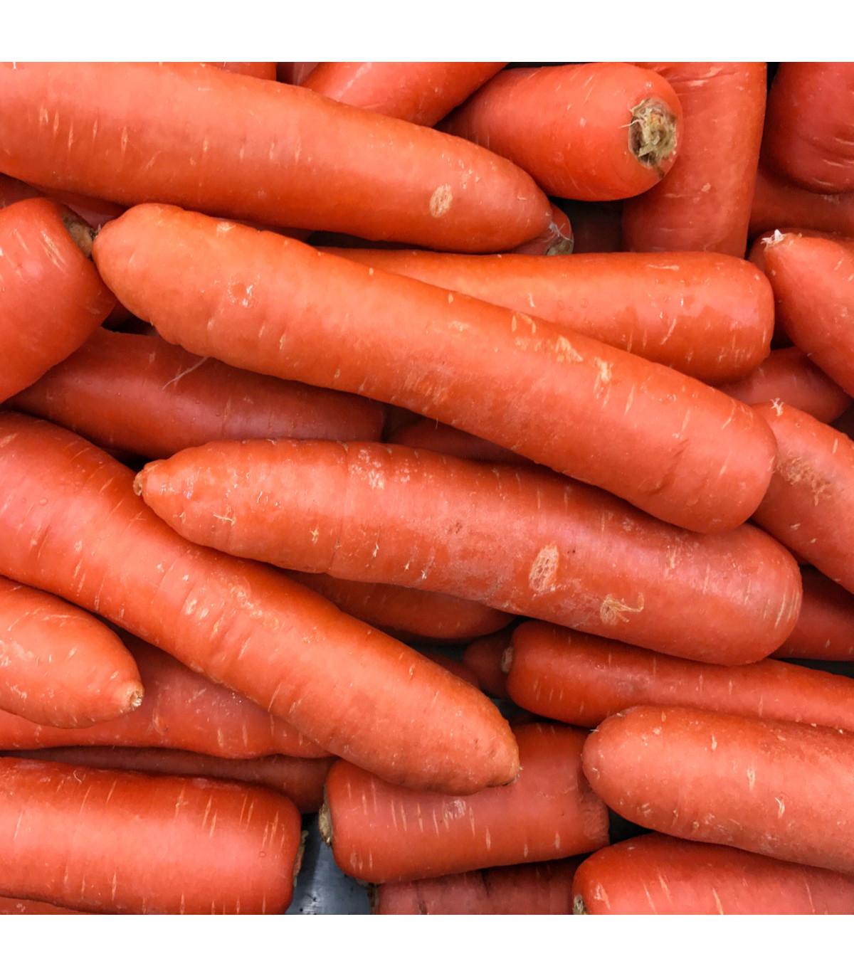 Mrkva Nantaise skorá - Daucus carota - semená - 900 ks