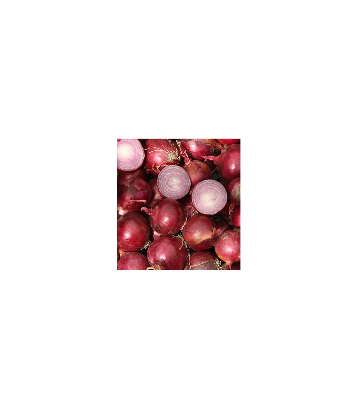 Cibuľa červený barón - Allium cepa L. - semená cibule - semiačka - 0,5 gr
