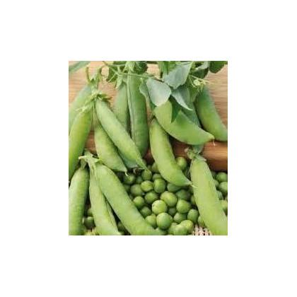 Hrach dreňový - Salout - semená hrachu - semiačka - 10 gr