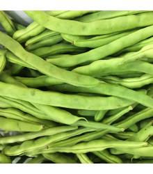 BIO fazuľa kríčková Maxi - Phaseolus vulgaris - bio semená fazule - 20 ks