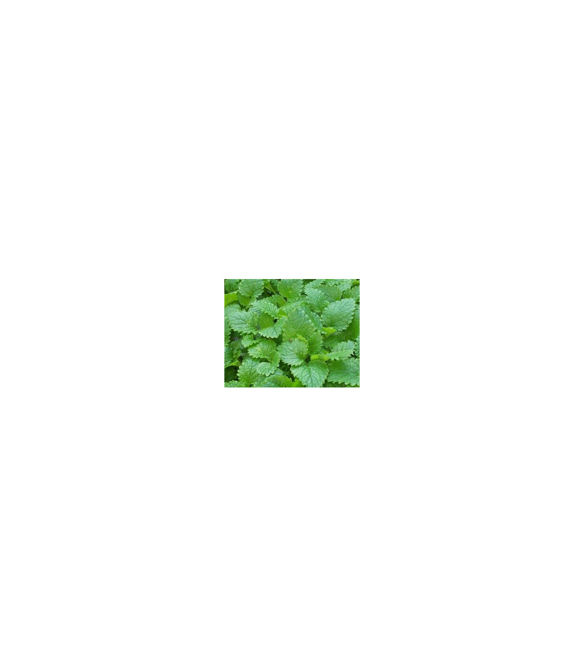 BIO Medovka - semená bio medovky - 0,2 gr