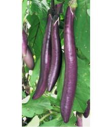 Baklažán - Fengyan - semená baklažánu - semiačka - 7 ks