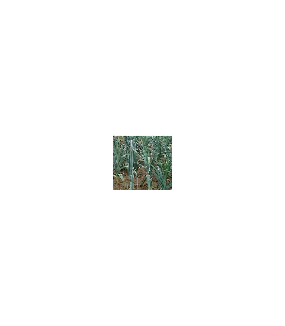BIO Pór Roxton F1 - semená póru - semiačka - 10 ks