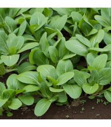 Komatsuna - Zelená horčica - semená komatsuny - semiačka - 20 ks