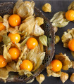 Machovka peruánska - Physalis edulis - semená machovky - semiačka - 10 ks