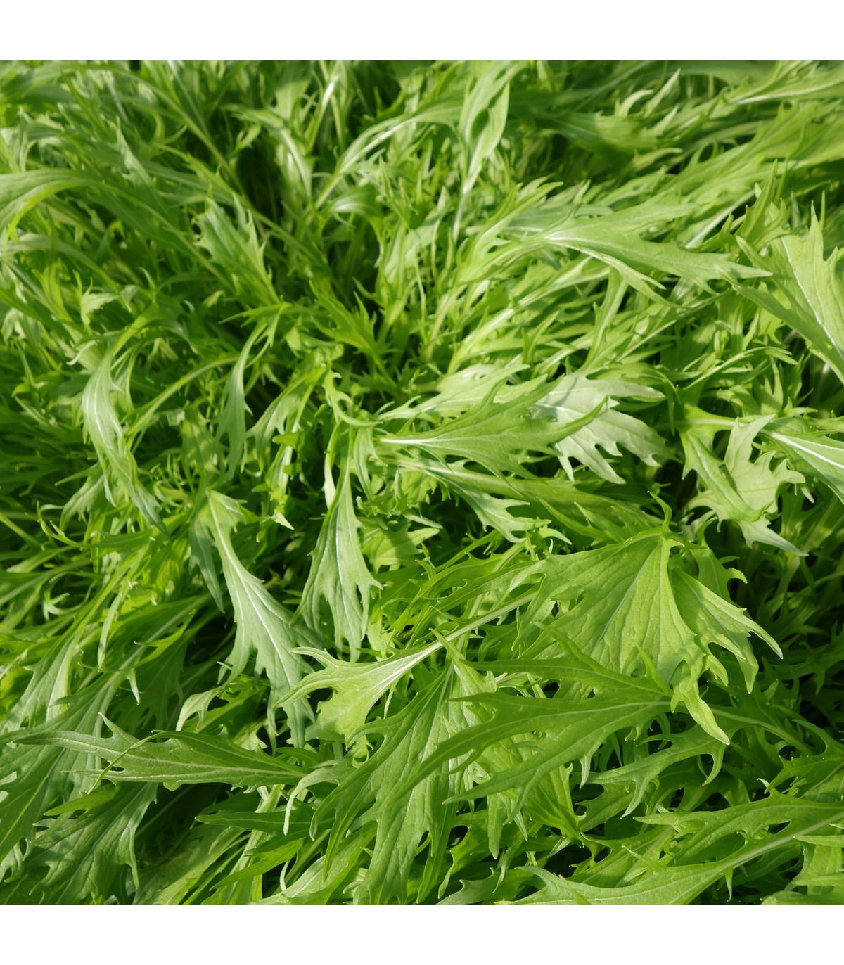 Mizuna Marshal - japonská horčica - semená mizuny - semiačka - 0,02 gr
