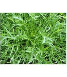 Mizuna Kruis F1 - japonská horčica - semená mizuny - semiačka - 0,02 gr