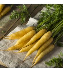 Mrkva žltá Lobbericher - semená mrkvy - semiačka - 1 gr