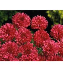 Nevädza poľná červená - Centaurea cyanus - semená nevädze - semiačka - 100 ks
