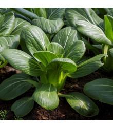 More about Pak Choi Hanakan F1 - Brassica rapa var rosularis - semená - 70 ks
