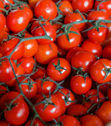 Paradajka kolíková Cherolla F1 - Lycopersicum esculentum - rajčiak - semená - 5 ks