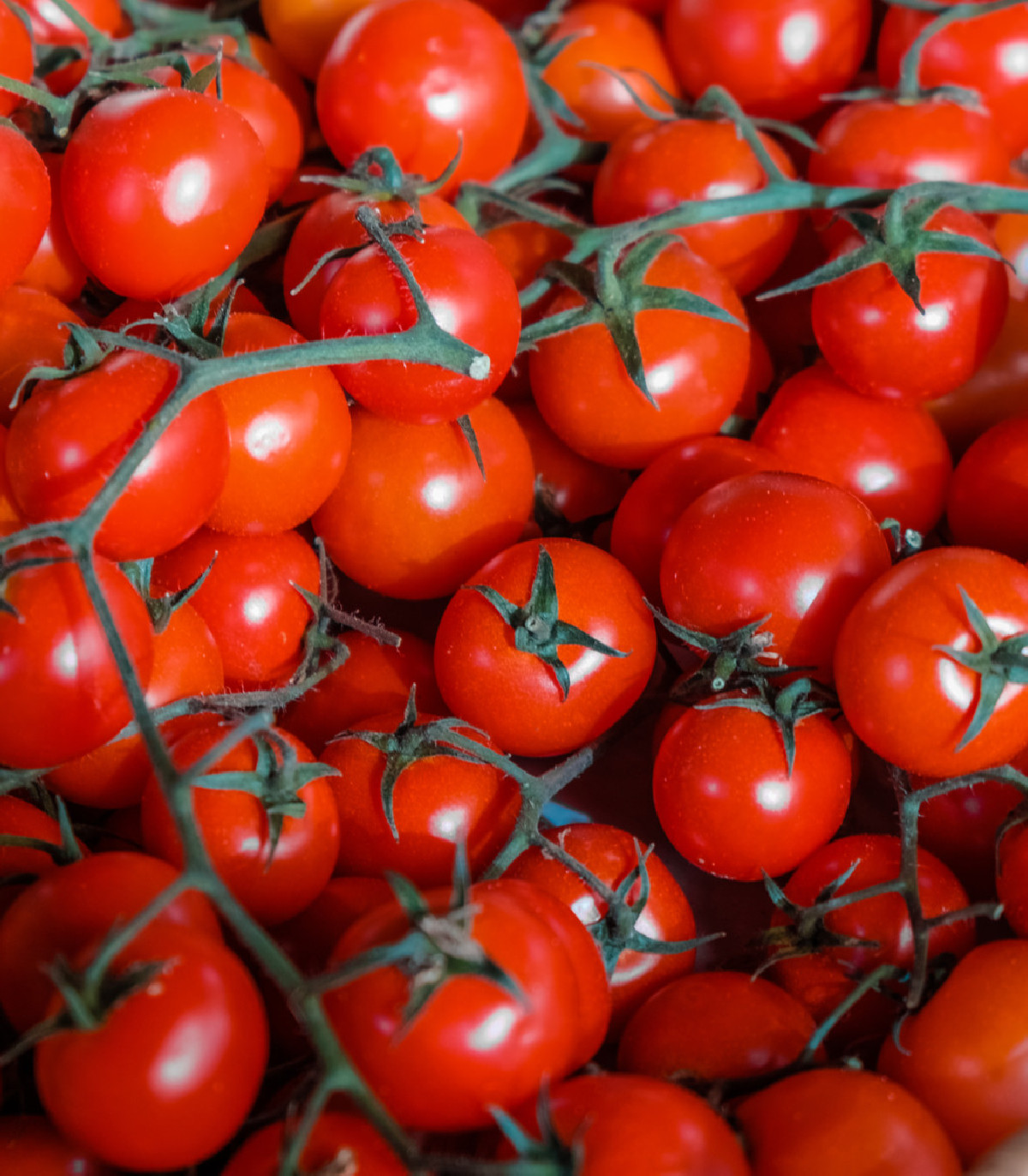 Paradajka Cherolla F1 kolíková - semená rajčiaka - semiačka - 5 ks