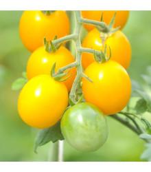 Paradajka zlatá Golden currant F1 - Lycopersicon esculentum - rajčiak - semená - 5 ks