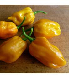 Kubánske Chilli Habanero Mustard - Capsicum Chinense - semená - 6 ks