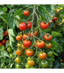 Paradajka kolíková hybridná Sweet Million - Lycopersicon lycopersicum - rajčiak - semená - 5 ks