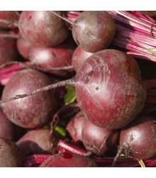 Cvikla Bulls Blood - červená repa - Beta vulgaris L. - semená - 50 ks