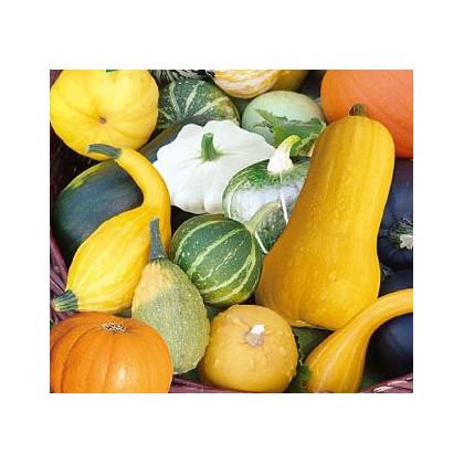 Tekvica veľkoplodá Gourment - Cucurbita maxima - semená tekvice - semiačka - 4 ks