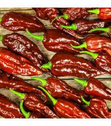 Chilli Bhut Jolokia hnedé - Capsicum Chinense - semená - 5 ks