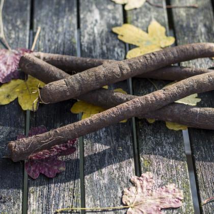 Hadomor španielsky Meres - čierny koreň - Scorzonera hispanica - semená - 30 ks