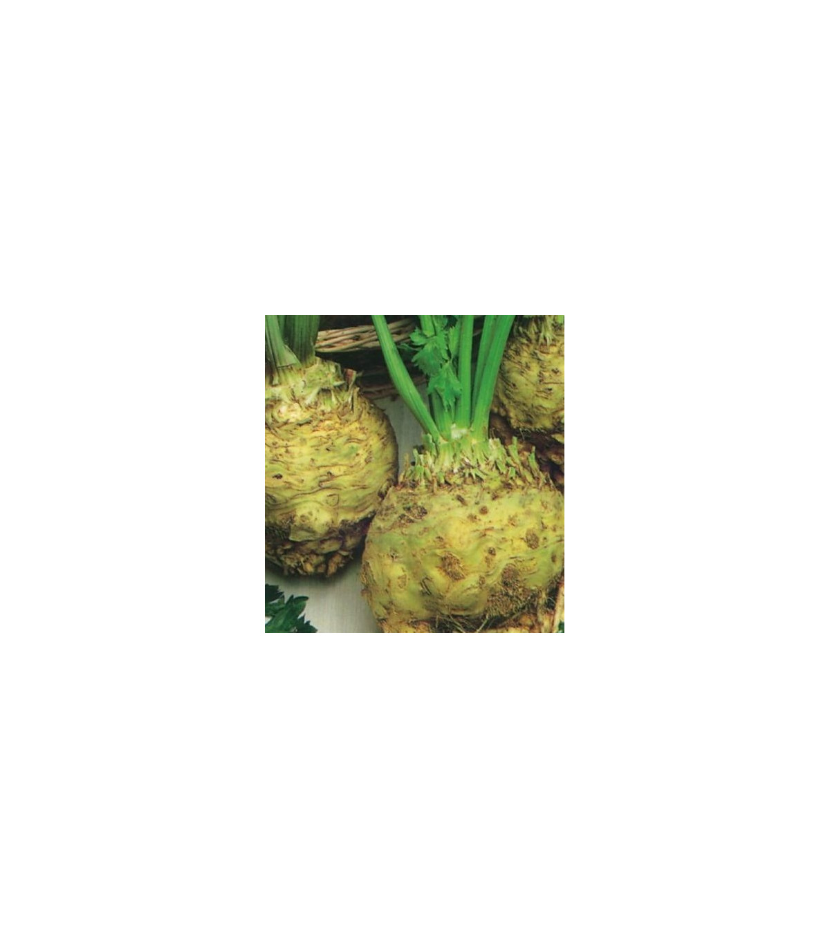 Zeler buľvový - Giant prague - semená zeleru - semiačka - 0,3 gr