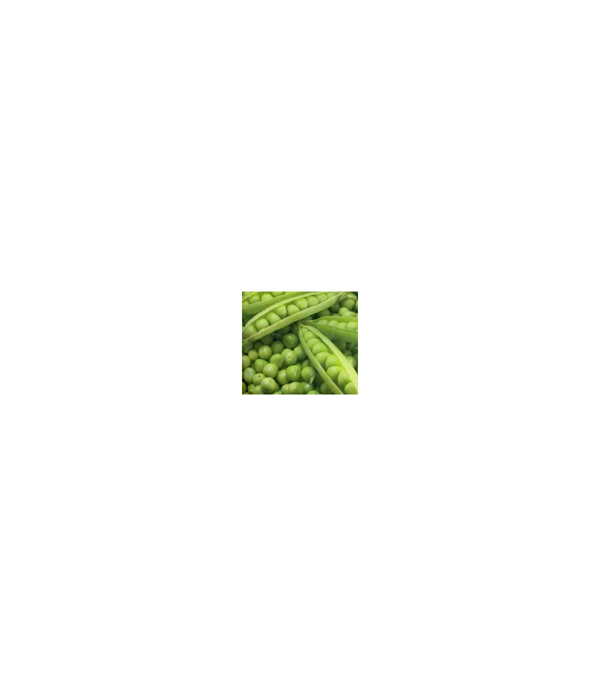 BIO Hrach cukrový Norli - Pisum sativum - semená hrachu - semiačka - 15 gr