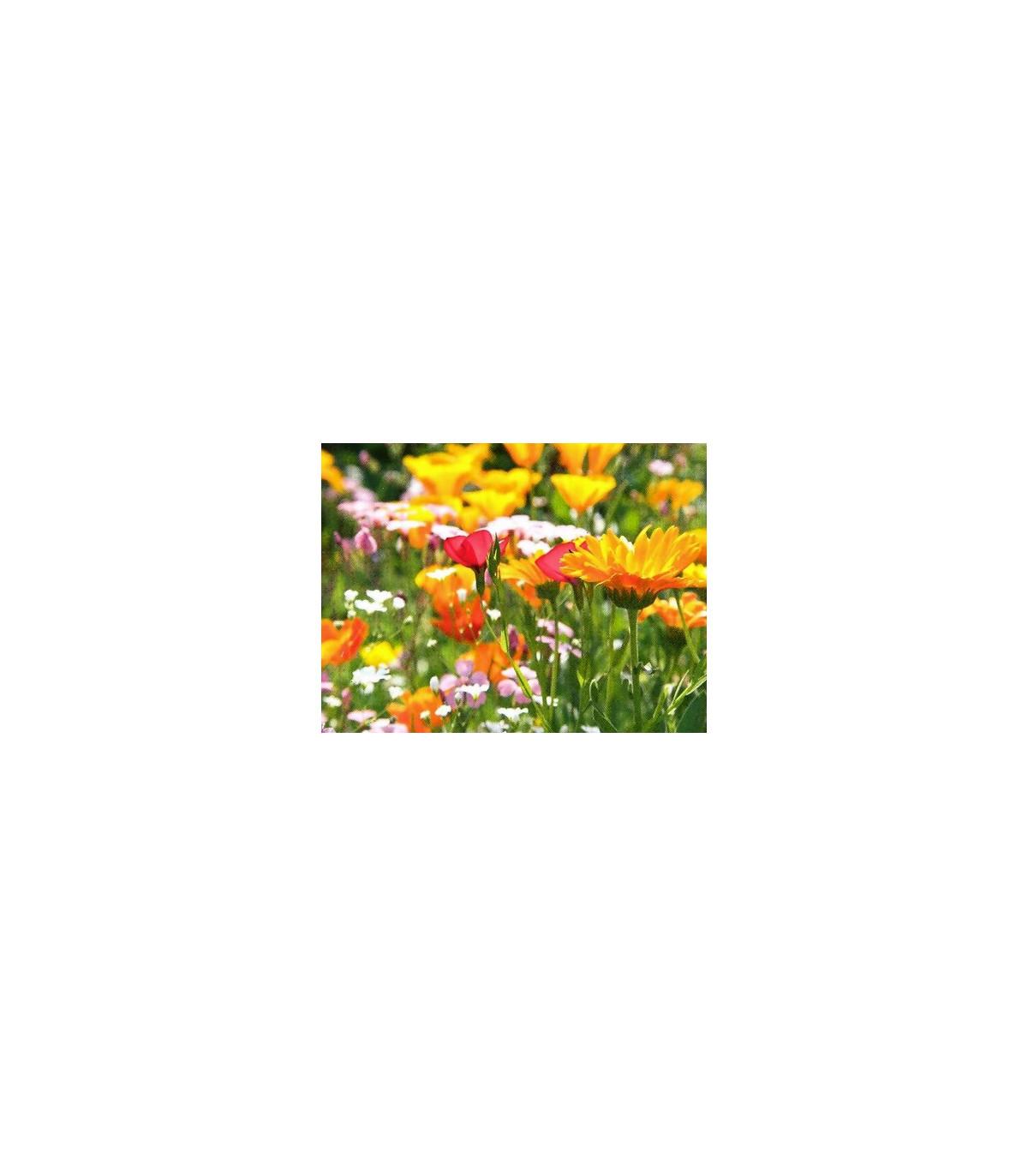 Zmes divých aromatických bylín - semená bylín - 0,2 gr