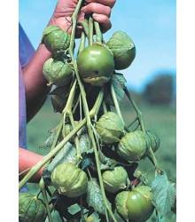 More about Tomatillo cisineros - semená - semiačka - 7 ks
