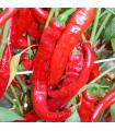 Paprika baraní roh Artist - Capsicum annuum - semená - 15 ks