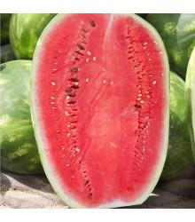 Vodový melón Lajko F1 - Citrullus lanatus - dyňa červená - semená - 5 ks