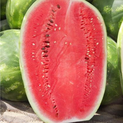 Dyňa červená - vodný melón F1 Lajko - Citrullus lanatus - semená dyne - semiačka - 5 ks