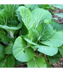 Horčica šalátová Misome F1 - Brassica campestris - semená - 20 ks