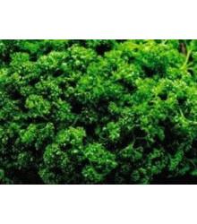 Petržlen Clivi - Petroselinum crispum - semená petržlenu - semiačka - 0,7 gr