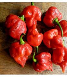 Chilli Trinidad Scorpion Butch- Capsicum sinense - 3. najštipľavejšie chilli - predaj semien chilli - 5 ks