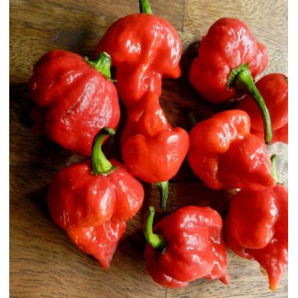 Chilli Trinidad Scorpion Butch - Capsicum Chinense - semená - 5 ks