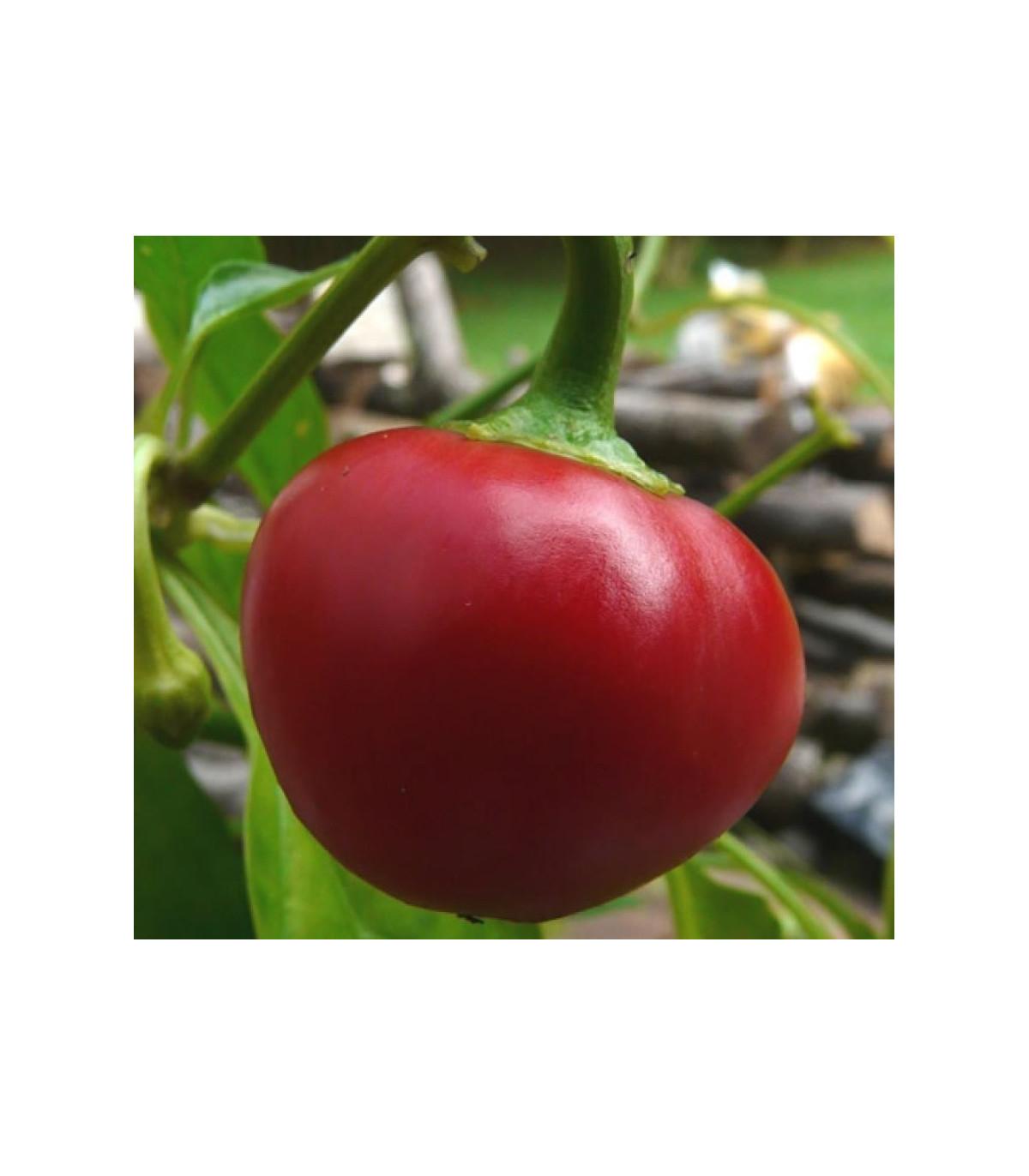 Chilli Pimento - Capsicum Chinense - semená - 6 ks