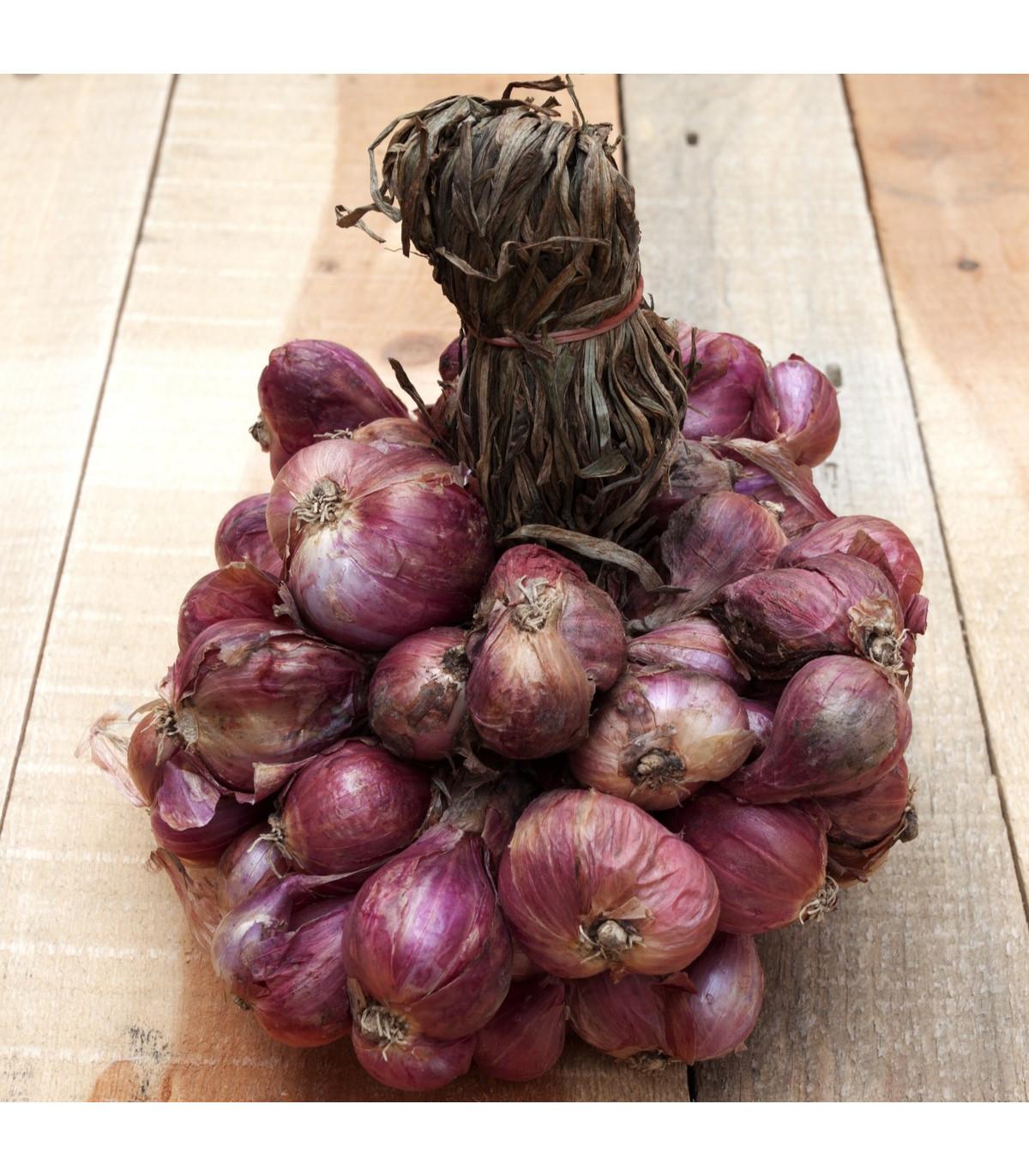 Cibuľa Zebrune - Allium cepa var aggregatum - semená - 70 ks