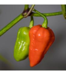 Chilli 7 Pot červené - Capsicum Chinense - semená - 6 ks