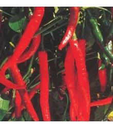 Chilli Kim Chi - predaj chilli semien - 6 ks